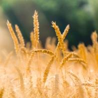 konkursi poljoprivreda